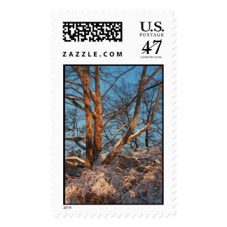 Sunrise, Snow and Sycamore Postage