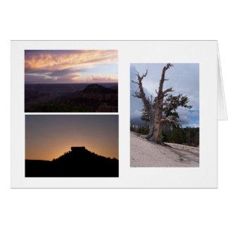 Sunrise, Sunset and Unusual Tree Card