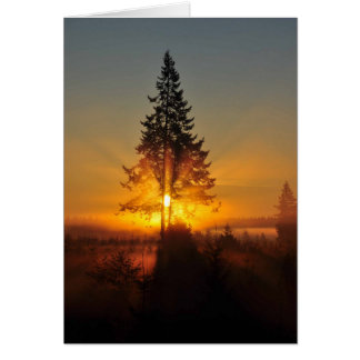 Sunrise Through Douglas Fir Trees Card