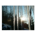 Sunrise Through Icicles Winter Nature Photography Postcard