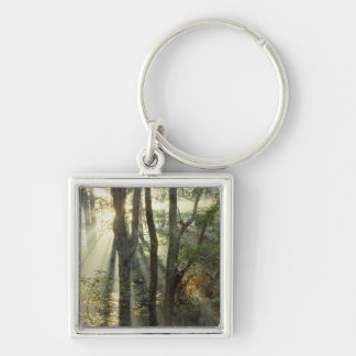 Sunrise through oak and hickory forest, key chain