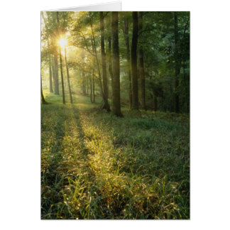 Sunrise through oak and hickory forest, Mammoth Card