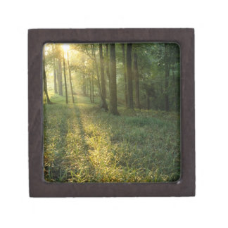Sunrise through oak and hickory forest, Mammoth Gift Box