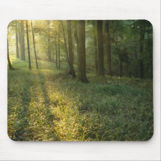 Sunrise through oak and hickory forest, Mammoth Mouse Pad