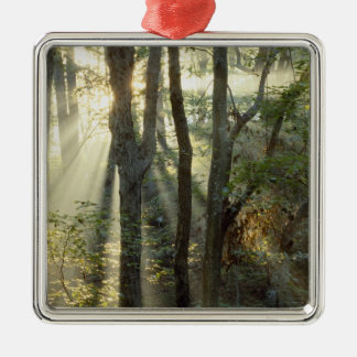 Sunrise through oak and hickory forest, metal ornament