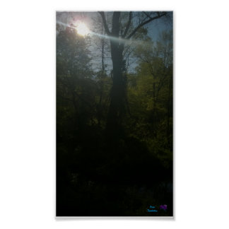 """Sunrise Woods Small (16.50"""" x 11.00"""") Value Poster"""