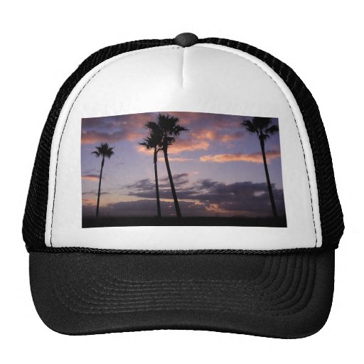 Sunrises Palm Trees Hat