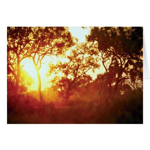 Sun's last light, in mist and trees, Australia Card