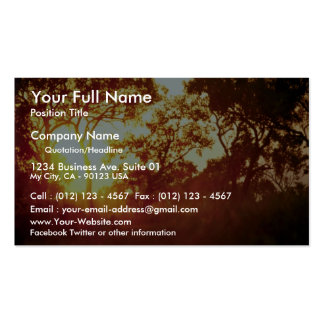 Sun's last light, in mist and trees, Australia Double-Sided Standard Business Cards (Pack Of 100)