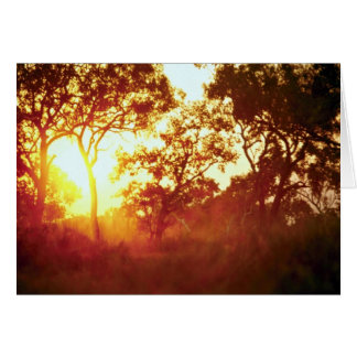 Sun's last light, in mist and trees, Australia Greeting Card