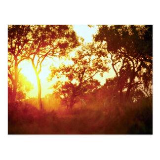 Sun's last light, in mist and trees, Australia Postcard