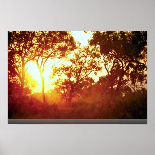 Sun's last light, in mist and trees, Australia Posters