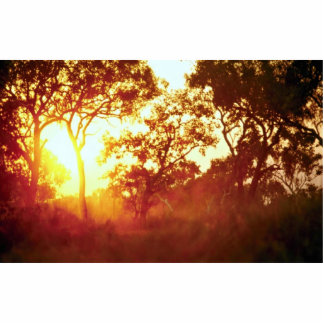 Sun's last light, in mist and trees, Australia Standing Photo Sculpture