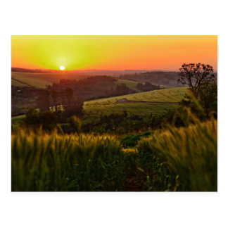 Sunset Agriculture Wheat Postcard