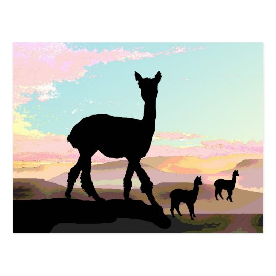 Sunset Alpacas Postcard