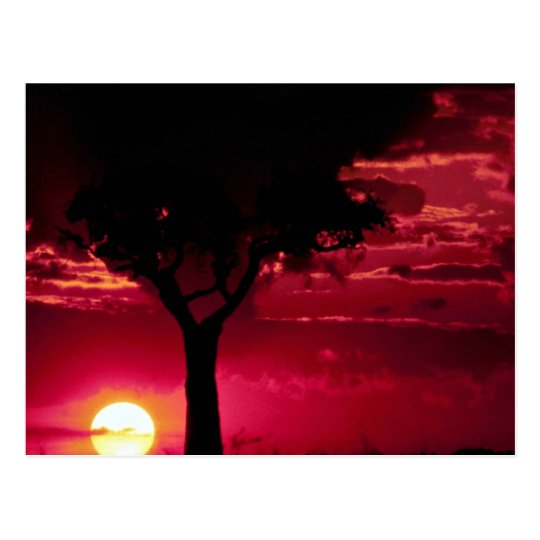 Sunset and Balanites Tree in Masai Mara Game Reser Postcard