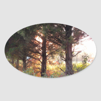 Sunset and Cedar Oval Sticker