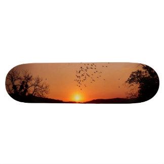 Sunset and flying birds skate board decks