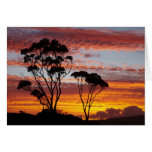 Sunset and Gum Tree, Binalong Bay, Bay of Fires, Card