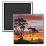 Sunset and Gum Tree, Binalong Bay, Bay of Fires, Refrigerator Magnet