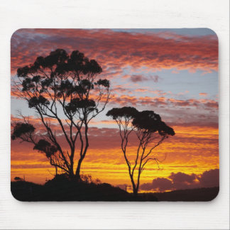Sunset and Gum Tree, Binalong Bay, Bay of Fires, Mouse Pad