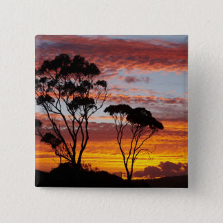 Sunset and Gum Tree, Binalong Bay, Bay of Fires, Pinback Button