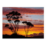 Sunset and Gum Tree, Binalong Bay, Bay of Fires, Post Card