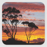 Sunset and Gum Tree, Binalong Bay, Bay of Fires, Square Sticker