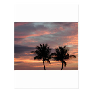 Sunset and palm trees postcard