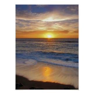 Sunset and sea gulls poster