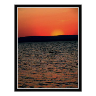 Sunset and swan poster
