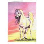Sunset Arabian Horse Cards