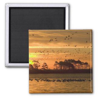 Sunset at Chincoteague Wildlife Refuge Virginia Magnet