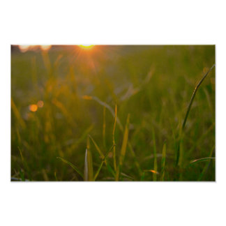Sunset at grassroots level poster