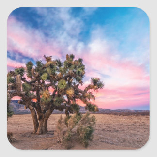 Sunset at Mojave Square Stickers