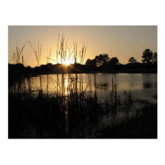 Sunset at the Pond Postcard