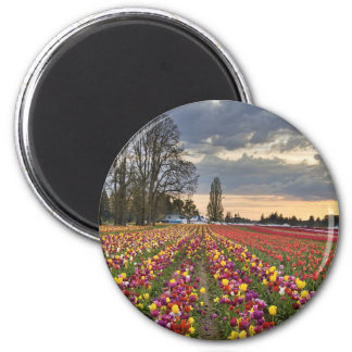 Sunset at Tulip Farm Magnet