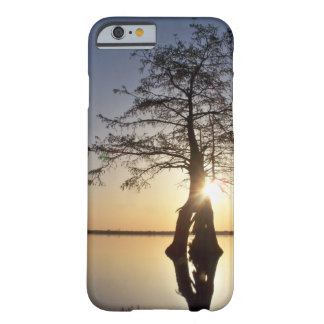Sunset Behind a Tree Barely There iPhone 6 Case