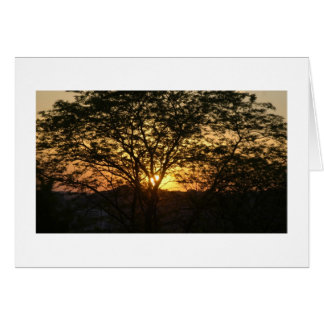 Sunset behind a tree stationery note card