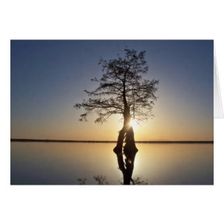 Sunset Behind a Tree Greeting Cards