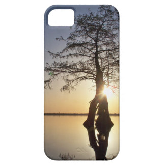 Sunset Behind a Tree iPhone 5 Cases