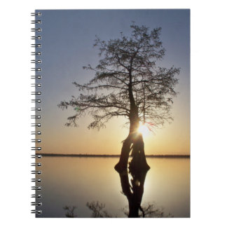 Sunset Behind a Tree Note Books