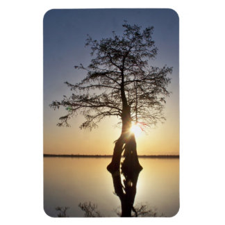 Sunset Behind a Tree Rectangle Magnet