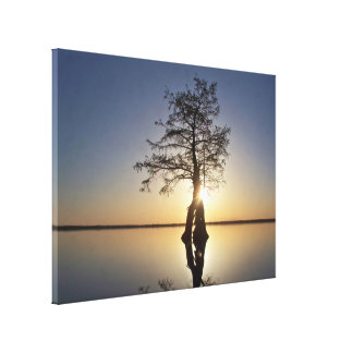 Sunset Behind a Tree Stretched Canvas Print