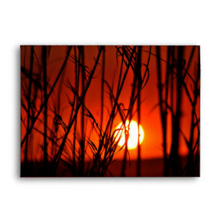 Sunset behind the bamboo envelopes