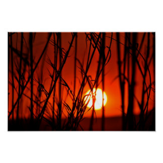 Sunset behind the bamboo posters