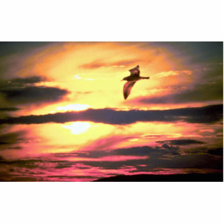 Sunset, bird in flight standing photo sculpture