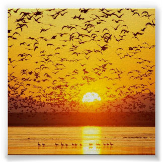 sunset birds posters
