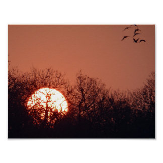 Sunset birds Tree nature peaceful park gold golden Poster
