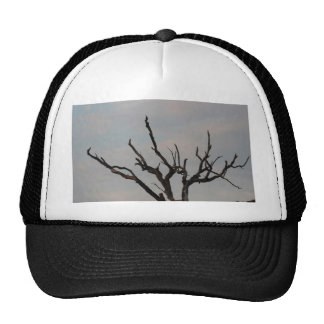 Sunset Branched Tree Hat